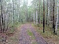 Nevyanskiy r-n, Sverdlovskaya oblast', Russia - panoramio (153).jpg