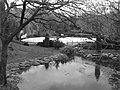 New York Central Park - panoramio (1).jpg
