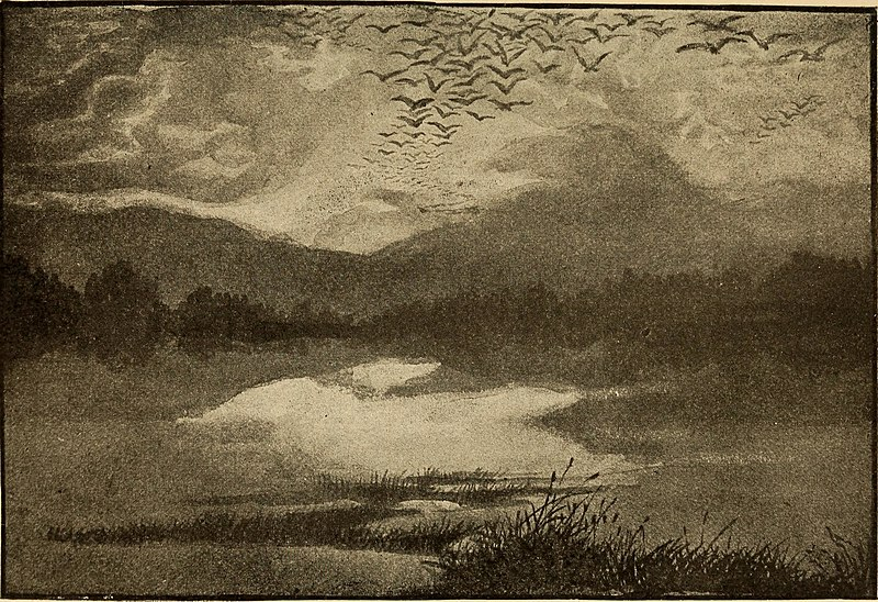File:News from the birds (1898) (14750556715).jpg