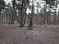 Noordwijk - Forest close to the dunes.jpg