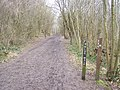 North Downs Way in Trosley Country Park - geograph.org.uk - 1177069.jpg