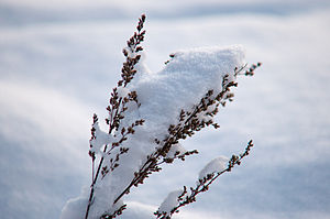 Norwegian winter snow