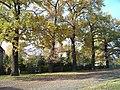 Oaks,oaks,oaks... - panoramio.jpg