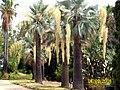 Ogród botaniczny Blanes - panoramio.jpg