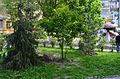 Old Kiev Hills 23.JPG