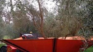 File:Olive harvest 2014.webm
