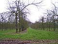 Orchard near Upper Holbach - geograph.org.uk - 152417.jpg