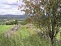 Overgrown lane, Liscabble - geograph.org.uk - 1432831.jpg