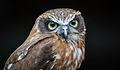 Owls @ Dragonheart, Enschede (9546621393).jpg