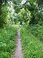 Ox Drove near Baverstock - geograph.org.uk - 845917.jpg
