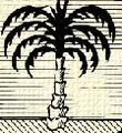 Pálma (heraldika).PNG