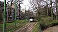 PCC's in stadspark II.jpg