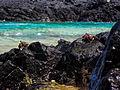 PE - Parque Nacional Marinho Fernando de Noronha - Praia do Sancho - Caranguejo.jpg