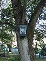 POL Grodziec Śląski Kapliczka na drzewie.JPG