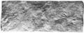 PSM V66 D151 Footprints of a stegomus a quadrupedal reptile.png