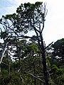 Pacific Rim National Park - Bog Trail (3670705251).jpg