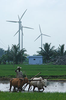 Paddy and farmer and wind turbines in India.jpg