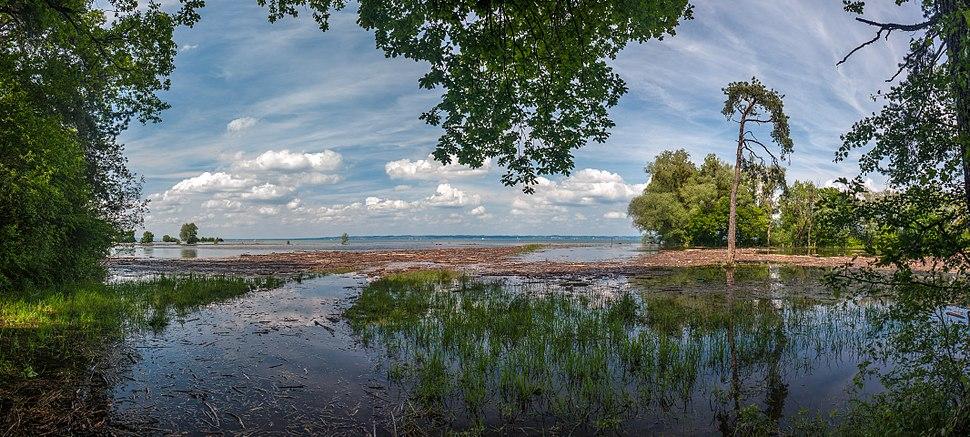 Panorama Hochwasser im Rheinholz