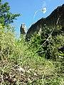 Papaver dubium subsp. austromoravicum sl13.jpg