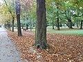 Park Miejski w Kielcach (56) (jw14).JPG
