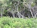 Parque Morro da Pescaria - panoramio - Tedd Santana (5).jpg