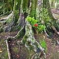 Parque Terra Nostra, Furnas, S. Miguel, Açores,Portugal - panoramio (24).jpg