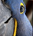 Parrot (30317407).jpeg