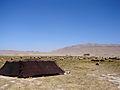 Pastoral Nomadism (266139773).jpg
