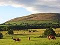 Pasture, Bassenthwaite - geograph.org.uk - 901085.jpg