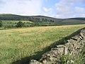 Pasture Field - geograph.org.uk - 222577.jpg