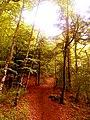 Path to Olympus 01.jpg
