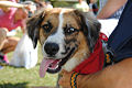 Paws in the Park-5-15.jpg
