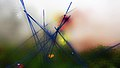 Pedro Meier Rauch Performance »Apocalypse Now« 2017, Color Smoke Bombs Installation, Ausstellung Skulpturenpark Stiftung Franz Eggenschwiler Switzerland, Nr. 09, Photo © Pedro Meier Multimedia Artist.jpg