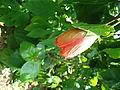 Penang Botanic Gardens (36).JPG