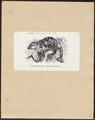 Phalangista maculata - 1872 - Print - Iconographia Zoologica - Special Collections University of Amsterdam - UBA01 IZ20300047.tif