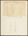Phoca leptonyx - 1700-1880 - Print - Iconographia Zoologica - Special Collections University of Amsterdam - UBA01 IZ21100169.tif