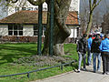 Photo of a large city tree in Amsterdam-Oost and Moroccan boys, along the Zeeburgerdijk; FotoDutch, April 2013.jpg