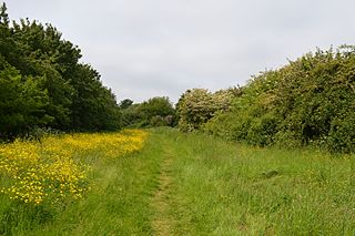 Pickers Ditch Meadow
