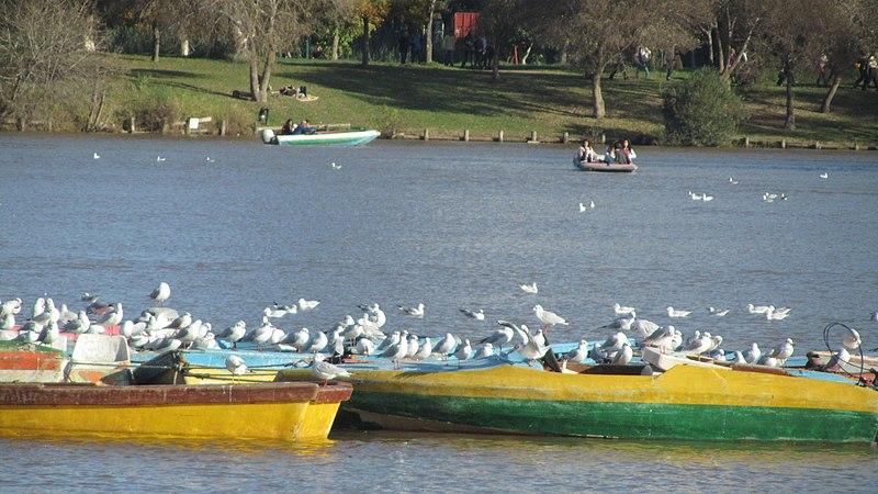 עופות בפארק