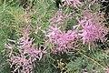 Pink flowers in France.jpg