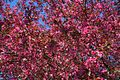Pinktree - West Virginia - ForestWander.jpg