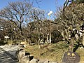Plum trees in Dazaifu Temman Shrine 8.jpg