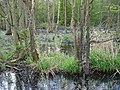Pollution in Dicker`s Wood - geograph.org.uk - 405663.jpg