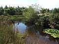 Pond, Lee Moor - geograph.org.uk - 1457100.jpg