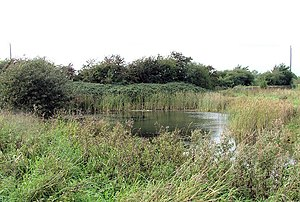 Aike Beck - A small pond near Beck Lane, Aike is the only part of Aike Beck still in water