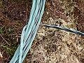 Power line - geograph.org.uk - 207773.jpg
