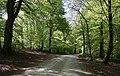 Prästaskogen may 2018-2.jpg