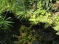 Pražská botanická zahrada - panoramio (5).jpg