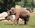 Prague Zoo - elephant 2.jpg