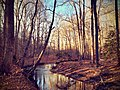 Prince William Forest Park - January Walk - Pretty creek.jpg